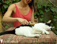Cepillar al gato y que le guste, ¡es posible! Te contamos por qué hay que cepillar a los gatos y los mejores trucos para que los 2 disfrutéis.