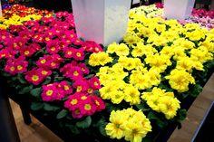 Feria Essen. Plants flower  http://elinvernaderodenaan.es/archivos/1013