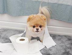 Bathroom Boo