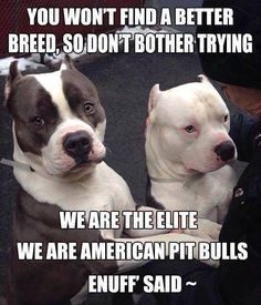 Uplifting So You Want A American Pit Bull Terrier Ideas. Fabulous So You Want A American Pit Bull Terrier Ideas. Cute Pitbulls, Nanny Dog, American Pitbull, American Bullies, Pit Bull Love, Pitbull Terrier, Bull Terriers, Terrier Dogs, Terrier Mix