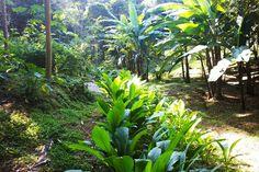 Échale un vistazo a este increíble alojamiento de Airbnb: Yogic Jungle Casita3 Close to Ocean - Bungalows en alquiler en Nosara