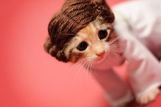 Photographer helps get kittens adopted by dressing them up as characters from popular movies and shows.
