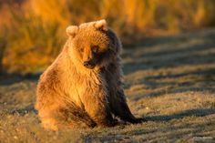 BABY BEAR by Christian Sanchez on 500px