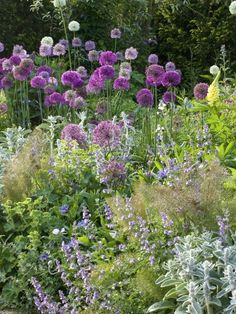 Planting | Combinations Allium.
