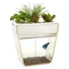 486WORLD - 魚菜共生的魚缸