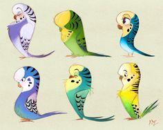Six ways to drawMelopsittacus undulatus.