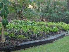 organic-garden...good info to know