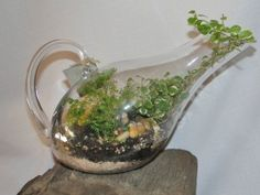 Terrariums are a beautiful addition to the home, but you'll need to maintain them if you want to keep them looking healthy. Here's how...