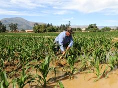 Sr. Bautista, a farmer in Laguna Sulti, Bolivia irrigating his crops with water from the Mano a Mano water reservoir.