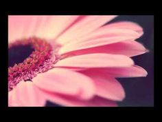Meditace pro pozitivní myšlenky s Robertem Reevesem - YouTube Tarot, Reiki, Meditation, Youtube, Flowers, Life Coaching, Spirit, Fitness, Astrology