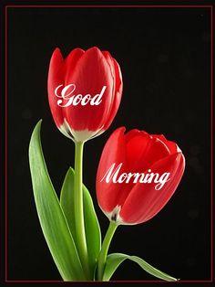 Good Morning Everyone, Good Morning Good Night, Good Morning Wishes, Morning Messages, Morning Greeting, Good Morning Images, Good Morning Quotes, Good Night Massage, Morning Morning