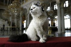 The Hermitage cats are a group of cats residing in the Hermitage Museum in Saint Petersburg, Russia.