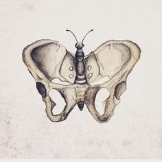 Beautiful pelvis #birth #labor #butterfly @beaubaby_uk • 23 likes