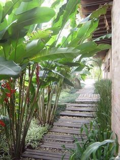 Gorgeous 31 Tropical Landscape Designs with Plant that Brings Coolness decrooa.c… - Garden Deko Tropical Garden Design, Tropical Backyard, Small Backyard Landscaping, Tropical Landscaping, Tropical Houses, Tropical Plants, Landscaping Ideas, Balinese Garden, Landscape Design Plans
