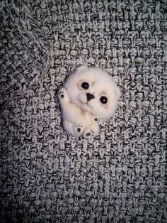 Felted Brooch Polar Bear animal needle wool by FeltPositive