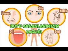 *: Sensory Organs * Coloring Pages / Matching Preschool Music, Kindergarten Worksheets, Teaching English, Coloring Pages, Drama, Science, Education, Youtube, Literacy Activities
