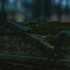 98 отметок «Нравится», 1 комментариев — Adelina (@aderhine) в Instagram: «Cemetery of Alexander Nevsky Lavra, Saint-Petersburg 03.03.15»
