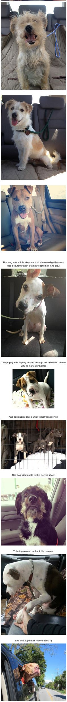 Photos of dogs taken after leaving the shelter and getting in the car…