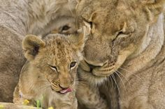 Two Open Eyes and a Tongue by Ken Watkins, via 500px