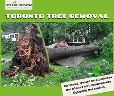 From tree disease protection to pruning and trimming, we put expertise and passion into the care of your trees and the greening of your environment. Call at now. Gta, Environment, How To Remove, Trees, Passion, Plants, Plant, Home Decor Trees, Environmental Psychology