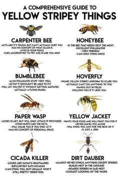 "I don't really consider honeybees to be pests and have been planting bee-friendly plants in my garden. But the new ""murderer"" bee, that beheads honeybees and can kill humans is frightening. The More You Know, Good To Know, Different Types Of Bees, Types Of Bugs, Types Of Insects, Carpenter Bee, Survival Life Hacks, Survival Prepping, Survival Tools"