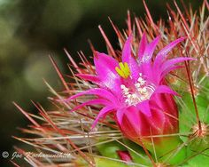 Flower... There is the beauty on Cactus...