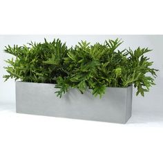 """Allied Molded Products Cannon Rectangular Planter Box Size: 20"""" H x 36"""" W x 12"""" D, Color: Garnet"""