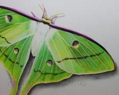 Items similar to Luna Moth Original Pencil Drawing on Etsy Pencil Drawings, Moth, Watermelon, The Originals, Bedroom, Handmade Gifts, Animals, Vintage, Etsy