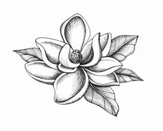 Line Drawing Southern Magnolia - Bing images Tattoo Drawings, Body Art Tattoos, Sleeve Tattoos, Art Drawings, Flower Drawings, Floral Drawing, Flower Sleeve, Plant Drawing, Magnolia Flower