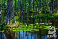 Beautiful Sparkleberry Swamp Off Of Lake Marion In Pinewood Sc Lived In South Carolina