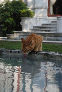 Ginger cat near the Blue Mosque in Istanbul, Turkey