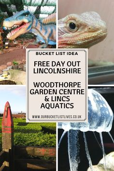 Great family friendly free day out in Lincolnshire. Woodthorpe garden centre with a maze, playground, animated dinosaurs and more. Plus a visit to Lincolnshire Aquatics. With hundreds of fish tanks, large fish to feed and reptiles. #freedayout #lincolnshire #family #dayout