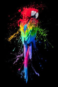 This art shows the variety and brightness of colours through a parrot which is renowned for it's rainbow-like feathers. Rainbow Art, Rainbow Colors, Neon Rainbow, Urbane Kunst, Inspiration Art, Arte Pop, Color Of Life, Bird Art, Oeuvre D'art