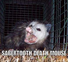Image result for funny animals named after food