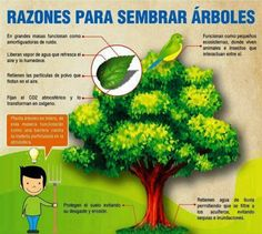 Razones para sembrar árboles