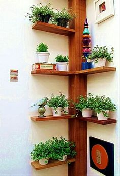 selbstgebautes Eckregal ideen pflanzen vasen baum ähnlich ähnliche Projekte un… homemade corner shelf ideas plant vases tree similar projects and ideas as presented in the picture you can find in our magazine Indoor Garden, Indoor Plants, Home And Garden, Herb Garden, Verticle Garden, Small Balcony Garden, Garden Hose, Wood Projects, Projects To Try