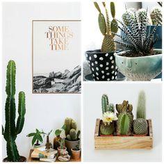 Decorando con: Cactus y suculentas, una muy buena opción