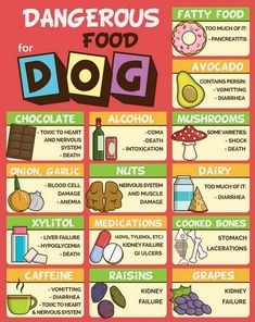 Food infographic Food infographic Best Dog Food Our Favorite Dog Food Brands. Infographic Description Food infographic Best Dog Food Our Favorite Dog Toxic Foods For Dogs, Dangerous Foods For Dogs, Foods Dogs Can Eat, What Dogs Can Eat, Human Food For Dogs, Labrador Retriever, Golden Retriever, Chien Goldendoodle, Cockapoo Dog