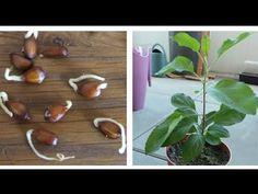 Planter Des Pommiers, Planters, Comment Planter, Plant Care, Green, Nature, Behance, Deco, Top