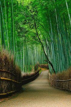 Bamboo forest - Arashiyama, Kyoto, Japan.