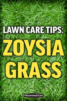 Zoysia grass is known for its ability to stand up to heat drought heavy foot traffic and a variety of other challenges In its optimal growing zones this tough grass can d. Zoysia Grass Seed, Zoysia Sod, Grass Seed Types, Grass Type, Design Thinking, Lawn Care Business, Business Cards, Lawn Care Tips, Lawn And Landscape
