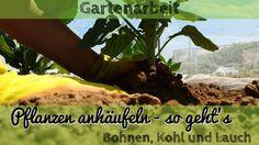 Pflanzen anhäufeln - im Gemüsegarten Bohnen, Kohl und Lauch anhäufeln