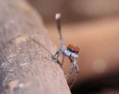 Bye!   These Spiders Will Cure Your Arachnophobia With Their Cuteness