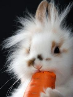Cute bunny rabbit chowing down on a carrot Lane Cute Creatures, Beautiful Creatures, Animals Beautiful, Cute Baby Animals, Animals And Pets, Funny Animals, Rabbit Eating, Tier Fotos, Cute Bunny