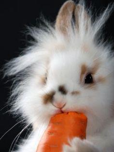 Yum Yums.  What a cute lion head bunny.......