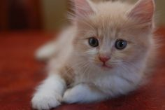 Makayla is dying to have an orange and white kitten...and secretly i am too ♥
