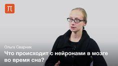 Нейрофизиолог Ольга Сварник о значении сна, улучшении памяти и нейронах мозга