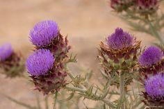 florida weeds    Reynolds Pest Management, Inc.