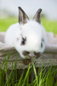 I smell carrots...❤️