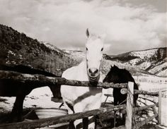 Andy Warhol - Horses at Powers Ranch, Colorado | From a unique collection of black and white photography at http://www.1stdibs.com/art/photography/black-white-photography/